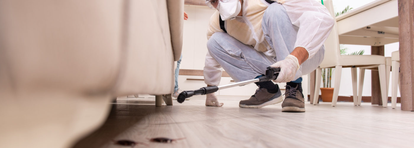 Pest Inspection: 3 Key Benefits of Hiring a Pest Control Company