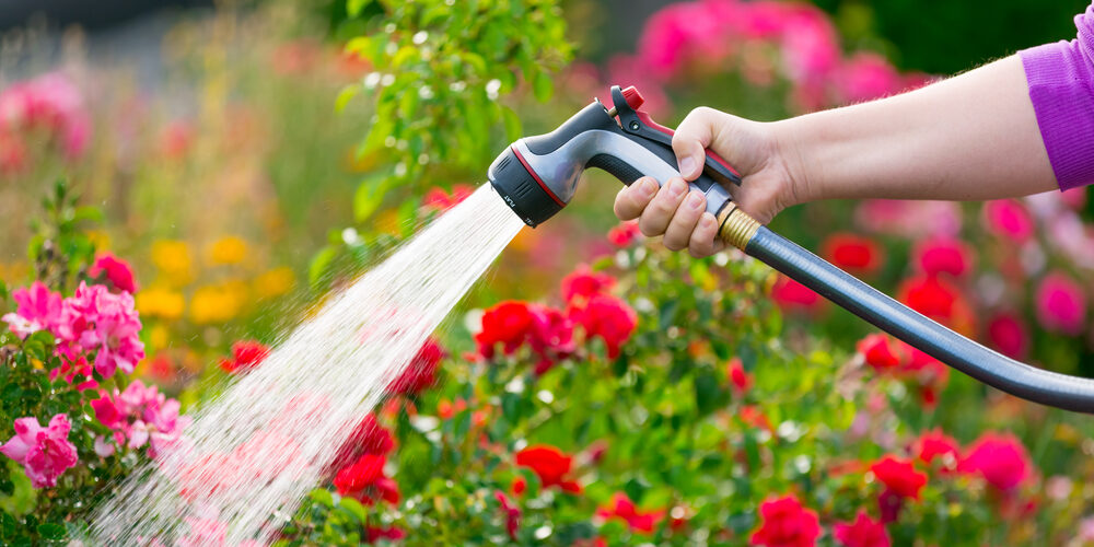 3 Tips For Protecting Your Garden From Extreme Heat